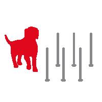 Hond bij paaltjes