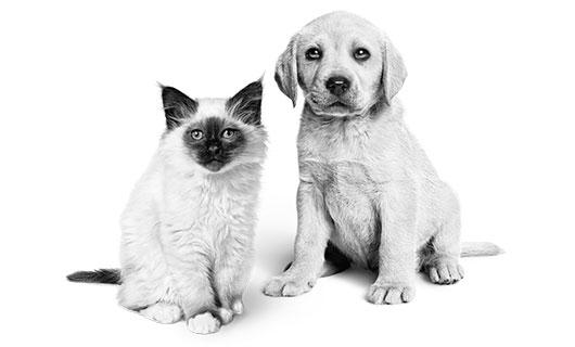 Je pup is geen hond, je kitten geen kat