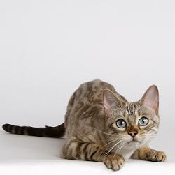 Diarree, een veel voorkomend probleem bij de kat