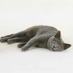 Herstel van je kat na ziekte of operatie