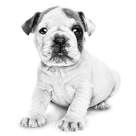 De spieren & botten van jouw pup groeien snel