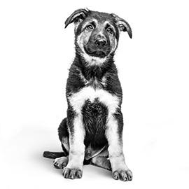 De natuurlijke afweer van jouw pup is kwetsbaar