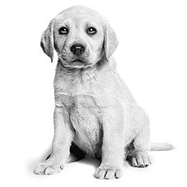 De spijsvertering van jouw pup heeft extra aandacht nodig