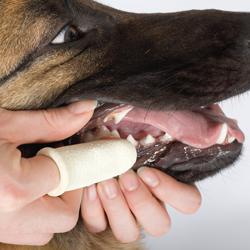 Pup tandverzorging