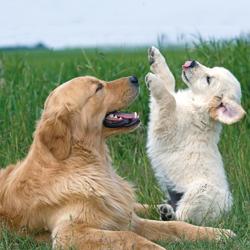 Volg de groei van je pup