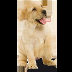 Verantwoorde beloningen voor je pup na goed gedrag