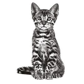 De juiste voeding voor je kitten