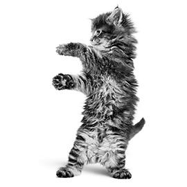 Kittentaal 1: wat vertelt je kitten met geluidjes?