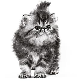 Speciale brokjes afgestemd op de kleine kaken van jouw kitten
