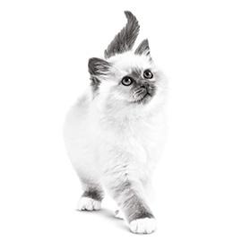 De natuurlijke afweer van jouw kitten is kwetsbaar