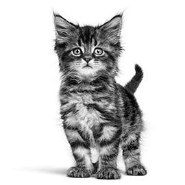 Socialiseren van je kitten: jong geleerd, oud gedaan