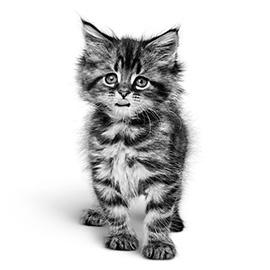 De spijsvertering van jouw kitten heeft extra aandacht nodig