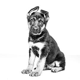 Ontwormen van je puppy is belangrijk voor zijn gezondheid