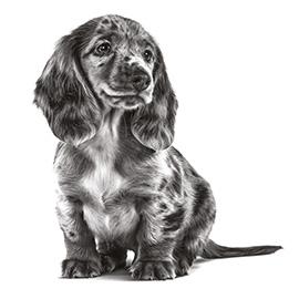 Je pup overschakelen op nieuwe voeding: hoe en waarom?