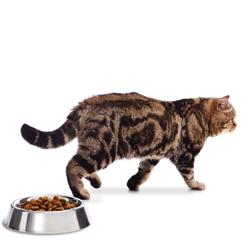 Bestaan er verantwoorde snacks voor je kitten?