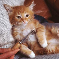 Tip: Socialiseer je kitten