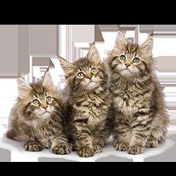 Tip: Doe de online test - Welke kat past bij jou?