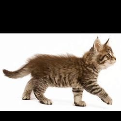 Je kitten is jong en moet groeien en leren