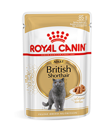 British Shorthair Adult Wet