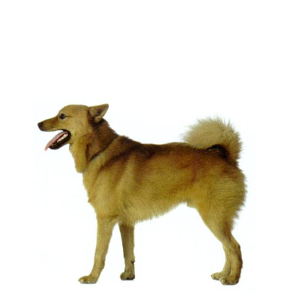 Overgewicht bij je puppy: iets om zwaar aan te tillen
