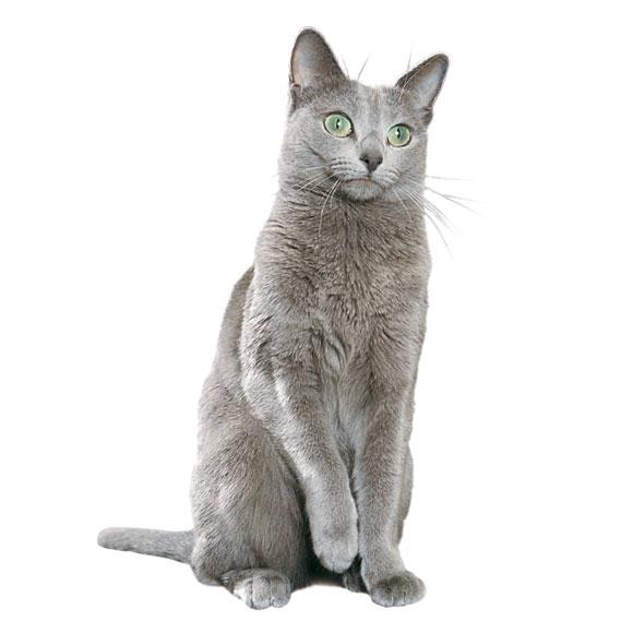 In 4 stappen je kitten veilig in huis achterlaten