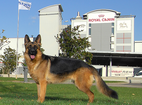 Royal Canin Campus Hond