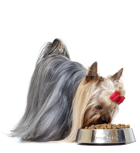 Royal Canin Hond Voerbak