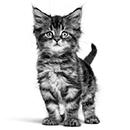 Voedingswijzer kitten