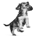 Voedingswijzer pup