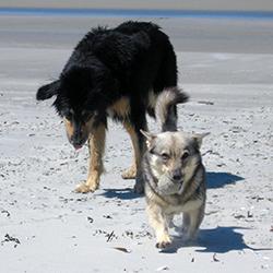 Hondenvoeding op maat omdat niet elke hond even actief is
