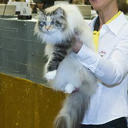 Kattenvoer op maat omdat sommige katten extra zorg nodig hebben