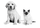 Hoe kies je een pup of kitten uit een nest?