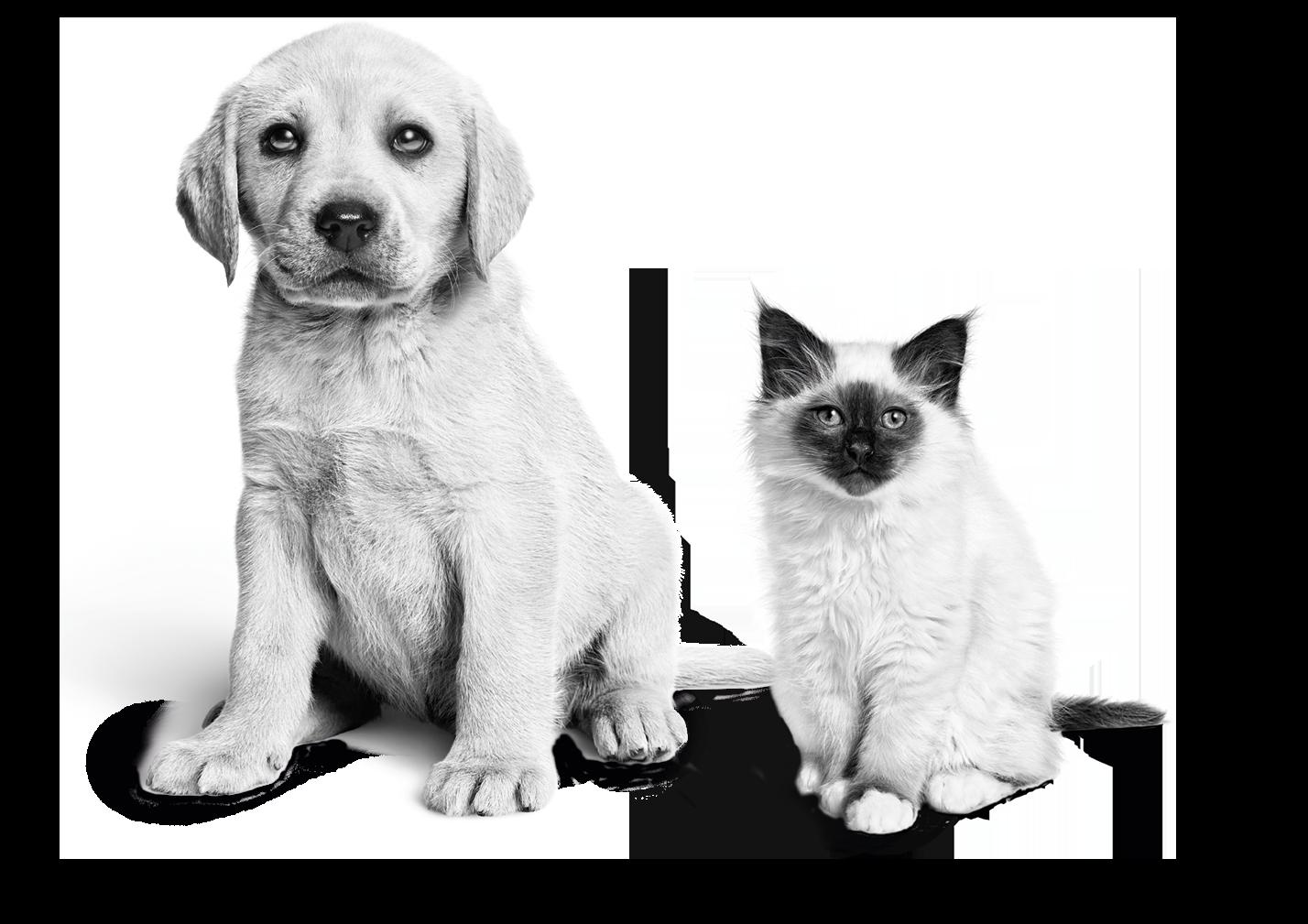 Welk huisdier past bij jou?