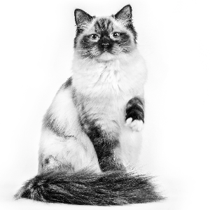 oververhitting bij de kat