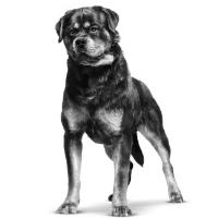 Hond is aangereden, hoe moet ik handelen?