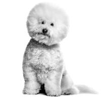 Benauwde hond. Hond heeft moeite met ademen