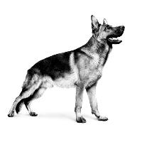 Zoetstoffen gevaarlijk voor honden