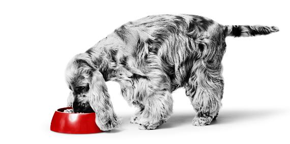Voedingsadvies-hond