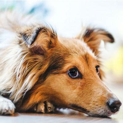 Wat zijn giftige stoffen voor je hond?
