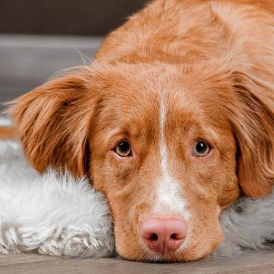 Heeft mijn hond obstipatie?