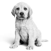 Inenten van je puppy of hond: zéér belangrijk!