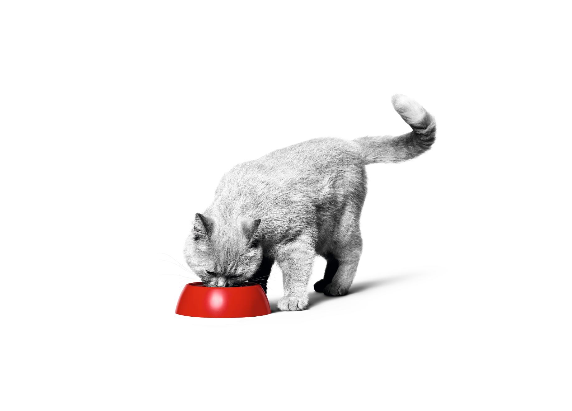 Voedingsadvies-kat
