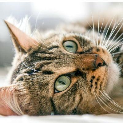 Hoe verzorg je een kat in haar laatste levensfase?