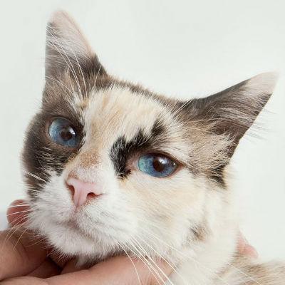 Welke aandoeningen komen veel voor bij oudere katten?