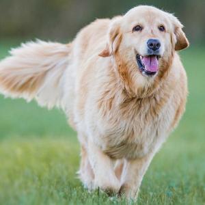 Hoe houd ik mijn hond op een gezond gewicht?