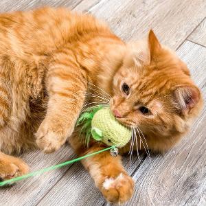 Hoe houd ik mijn kat op een gezond gewicht?