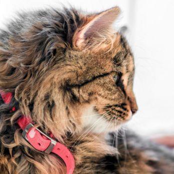 Hoe introduceer ik een kitten bij mijn kind?