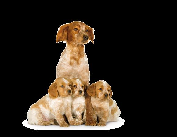 Medium Starter Mother & Babydog