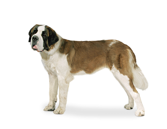 Giant Dog Junior - 8 t/m 18 of 24 maanden
