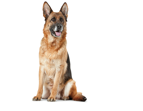 Large Dog Senior Consult Mature - vanaf 5 jaar